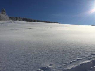 sníh v orlických horách