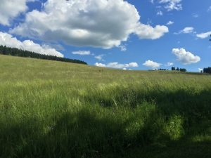 orlické hory v létě